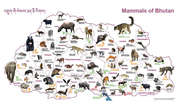animals map